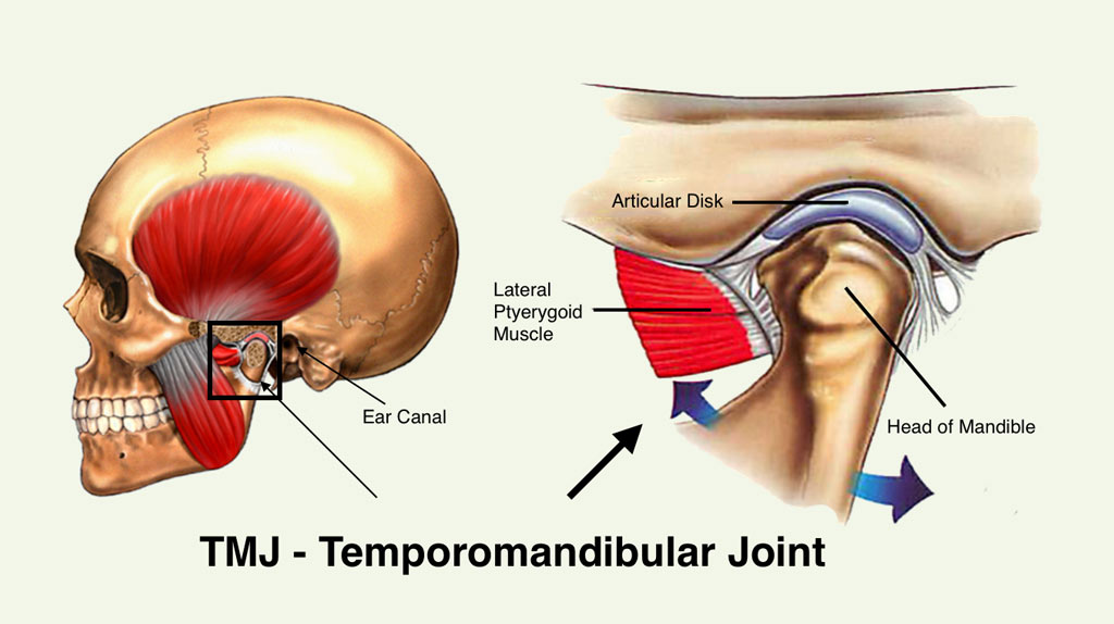 tmj joint location
